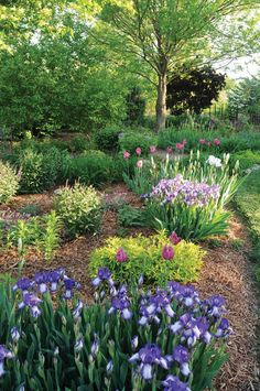 A Colorful Country Garden: purple-themed garden—choosing plants in different shades of one color creates unity and interest.