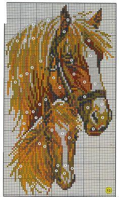 Cavalos -  /  Horses -