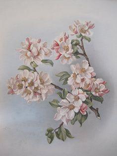 Vintage Apple Blossom Print Original Frame by sprucedroost on Etsy, $28.00
