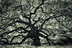 Angel Oak by StephenYelverton