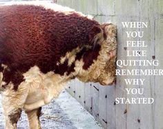We've all felt like this... Farm life  https://www.facebook.com/thewifebehindthefarmer/