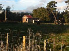 Tikokino farm shed Farm Shed, Church Building, Homesteads, Heartland, Sheds, Old Houses, New Zealand, Buildings, Country