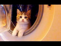 Kittens Here, Kittens There, Kittens Everywhere! | PawTube