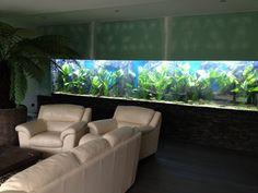 AKVÁRIA NA MÍRU design aquarium - Fotoalbum - Zařizování akvária 6000 litrů