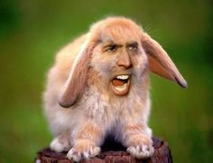 28 things improved by Nicolas Cage's face| studentbeans.com