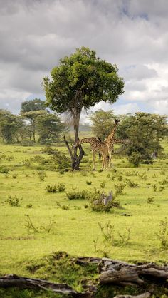 My favourite place ok the world, the Maasai Mara, Kenya. Dramatic location and the perfect honeymoon destination