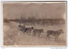 Dog Sled team , Great Slave Lake , Hay River , N.W.T. , Canada , 00-10s - Delcampe.com