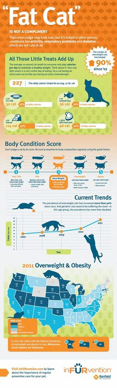 Overweight Cats and Feline Obesity - inFURvention - Banfield Pet Hospital State of Pet Health