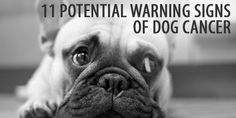 11 Potential Warning Signs of Cancer in Dogs (#cancer #dogs #officepets)