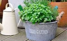Container Herb Garden - Bing Images
