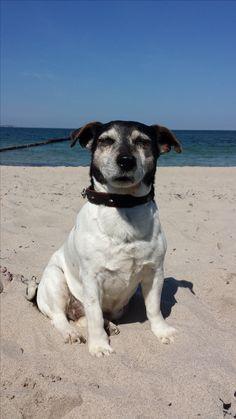 Hunde Foto: Katrin und Jacky - Unsere alte Dame.... Hier Dein Bild hochladen: http://ichliebehunde.com/hund-des-tages  #hund #hunde #hundebild #hundebilder #dog #dogs #dogfun  #dogpic #dogpictures