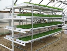 Fodder Hydroponic Tiered System | Amazing Hydroponic Systems For Indoor Gardening