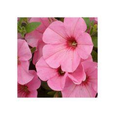 Surfinia Compact Sweetunia Bubblelou Compact, Petunias, Bloom, Plants, Painting, Beautiful, Art, Replant, Big Flowers