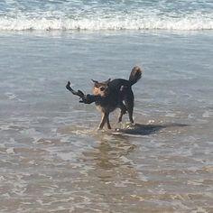 #happy dog #apollobay by mcgann01 http://ift.tt/1LQi8GE