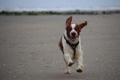 Lekker rennen.  Copyright: Van Geerdersbeek Photography