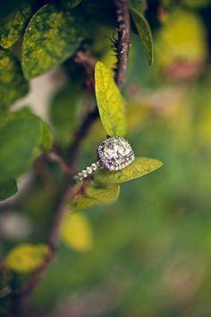 beautiful ring shot for a garden themed wedding!