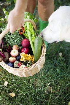 Höstens matkorg Healthy Food, Healthy Recipes, Healthy Foods, Healthy Eating Recipes, Healthy Eating, Health Foods, Healthy Food Recipes, Clean Eating Recipes, Healthy Diet Recipes