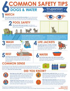Trupanion: Dogs and Water Safety - Infographic : dogtipper
