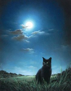 The Midnight Cat - black cat patiently waiting, listening in a green pasture…