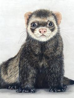 Ferret Portrait: Numbered Print от JadeArgent на Etsy