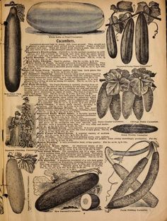 Alneer Brothers seed and plant catalogue for 1898 : Alneer Brothers : Free Download, Borrow, and Streaming : Internet Archive Plant Catalogs, The Borrowers, Brother, Archive, Internet, Cover, Illustration, Plants, Free