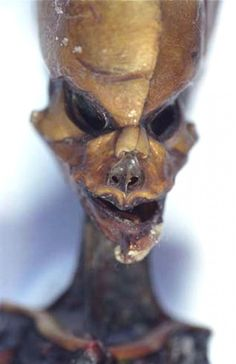 The Atacama Humanoid, is the skeletal remains of a 6-inch (150 mm) human found in a deserted town in the Atacama Desert, Chile in 2003. Ata has since found its way into a private collection in Spain. It was found by Oscar Muñoz near an abandoned church in a ghost town called La Noria, 56 km to the interior of Iquique in northern Chile. Muñoz later sold it to a local pub owner for 30,000 pesos, who then sold it to a Spanish businessman, Ramón Navia-Osorio, who is the current owner.