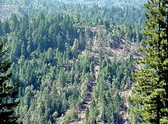 We Can Halt Animal Extinction by Restoring Forests. http://blog.savetheredwoods.org/category/futures/