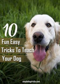 10 Fun Easy Tricks to Teach Your Dog-Simple Dog Tricks http://simpledogtricks.com/fun-easy-tricks-teach-dog/