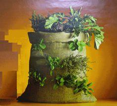 Un #saco también puede ser nuestra #mesa de cultivo para tener nuestro propio #huerto urbano