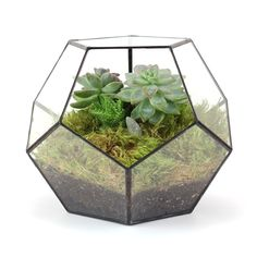 DODECAHEDRON TERRARIUM from Old Faithful Shop #modern #geometric
