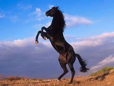 Hermosos caballos salvajes