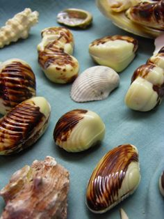 Csokoládé Reformer: Az igazi tenger gyümölcsei bonbon Ketogenic Recipes, Diet Recipes, Vegan Recipes, Dessert Recipes, Mousse, Keto Results, Lollipop Candy, Winter Food, Keto Dinner