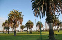 Albert Park is a Melbourne suburb about three kilometers south of the Central Business District (CBD). Melbourne Suburbs, Albert Park, Central Business District, Real Estate, Victoria, Plants, Real Estates, Flora, Plant