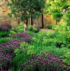 Napa Valley garden