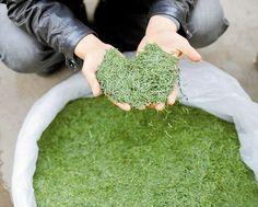 Зеленый чай Чжу Е Цин (Свежесть Бамбуковых Листьев)