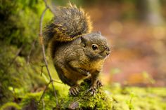Squirrel in Costa Rica