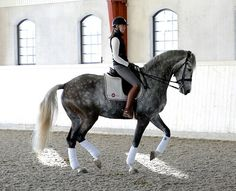 So I know this is not perfect as far as dressage-wise, but lovely horse and WOW what an arena!