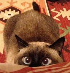 Uh-oh....crazy eyes....Ah's ready to  JUMP!! ...(via Fredrik Hansson)