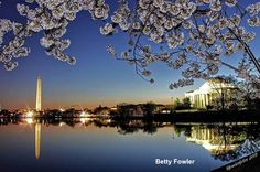 Cherry Blossoms 2015: Top 30 photos « Just In Weather