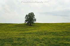 The Lonely Tree https://www.facebook.com/hunterphotos13