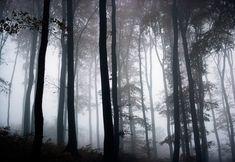 Foggy Woods Ireland Canvas Art - The Irish Image Collection Design Pics x Tree Wall Murals, Custom Wall Murals, Beautiful Houses Interior, Beautiful Homes, Irish Images, Wood Wallpaper, Wood Home Decor, Landscape Walls, Walk In The Woods