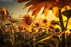 Alzati e guarda il sole nelle mattine e respira la luce dell'alba.  Tu sei la parte della forza della tua vita...    Pablo Neruda