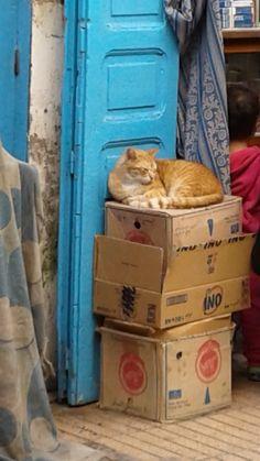 Medina cat in Essaouira, Morocco