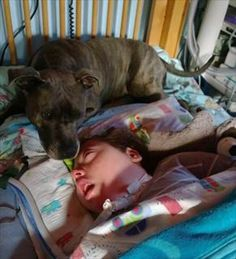 Don't take Tascha, the service dog, away from his owner, a boy in vegetative state!