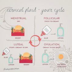 Gut Health, Health And Wellness, Health Fitness, Cervical Mucus, Hormone Balancing, Menstrual Cycle, Holistic Healing, Health Coach, Fertility