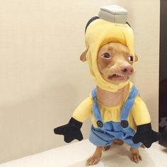 Minion Pup