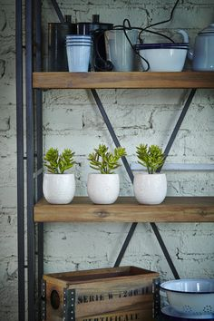 Bring life to any space with a splash of greenery | Super A-Mart