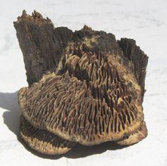 Floristikdeko - Baumpilz von der Natur geformt - ein Designerstück von mARgriTs-Atelier bei DaWanda