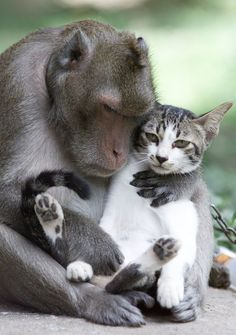 45 Adorable Animal Odd Couples