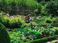 Cultivar Biodiversidade